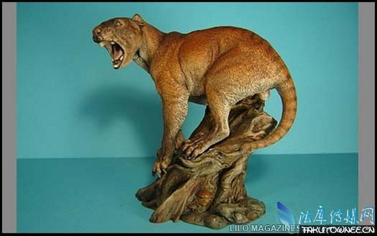 异剑齿虎   异剑齿虎的化石在上世纪80年代被业余的化石爱好者发现。从它的化石来看,它的身材比其他剑齿虎都要矮小,四肢也不是很发达。它生活在北美洲,大约在古代一直存在。           巨型豹   巨型豹是一中早已灭绝的猫科动物,和现代的美洲豹很相似,它大约生活更新世的欧洲。巨型豹因其巨大的体形而得名,从复原图来看,一只成年巨型豹比现在的跑车还要大上许多。巨型豹和美洲狮生活在同一时代,差不多是为了在竞争中求的生存,所以进化的体型比较庞大。   猫科动物和犬科动物相比谁更厉害一些?