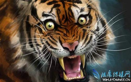 老虎身上为什么有花纹?老虎有没有天敌?