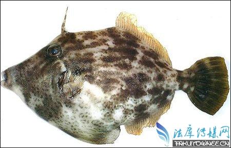 日本网友吃鱼前晒照捡回性命,吃生鱼片会染上寄生虫吗?