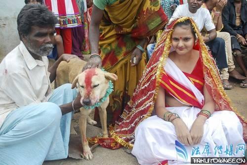印度一女子居然嫁给一条狗,印度人为什么奇葩事那么多?