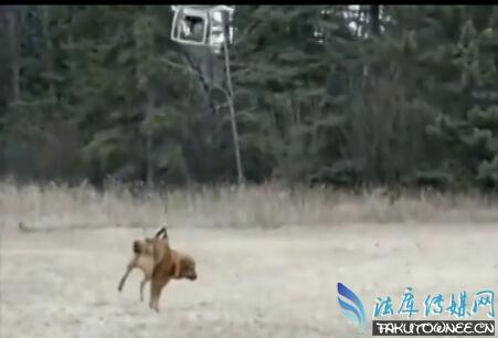 外国男子无人机遛狗溜上天,买一架无人机要多少钱?