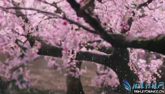 三生三世十里桃花插曲繁花完整版何时上线?董贞好听的歌曲推荐