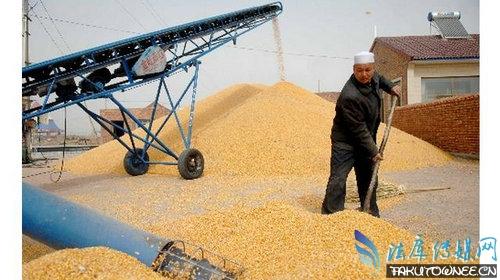 个人收购玉米是非法吗?收购玉米为什么会违法?