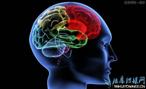 人类大脑成熟需要多少年?人类大脑还能进化开发吗?