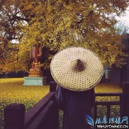 李世民亲手种银杏树在哪里?树龄千年的银杏树到底能活多少年?