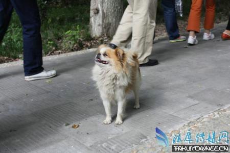 狗能认识自己的主人吗?狗走丢后能自己找到回家的路吗?