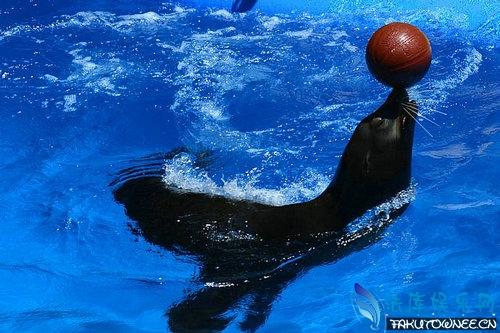 海狮有攻击性吗?海狮和海豹哪个更厉害?