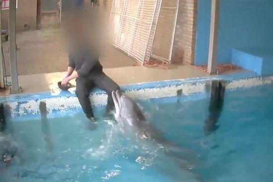 国外男子居然与兽类发生性行为,海豚的性器官长什么样?
