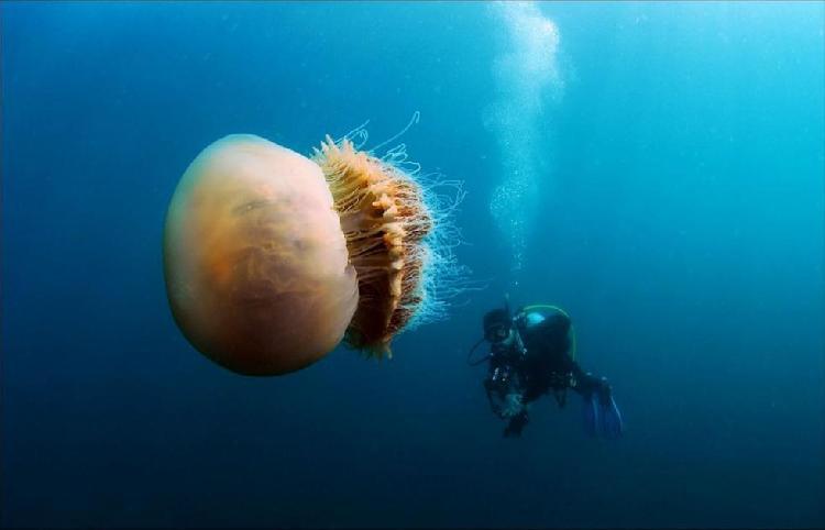 深海中有什么巨型生物?海洋生物一共有多少种?