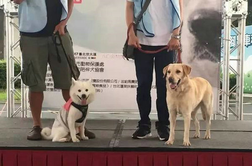 什么品种的狗可以作搜救犬?搜救犬退役后都去哪了?