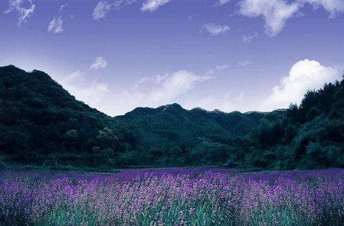 国内有花海旅游景点推荐,花海旅游时必备的拍照姿势