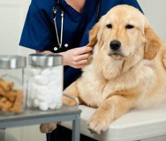 狗狗为什么会害怕打针?狗狗特别害怕打针应该怎么办?