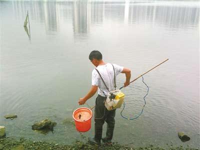 电鱼被抓到会怎么处理?电瓶电鱼真的能电死人吗?
