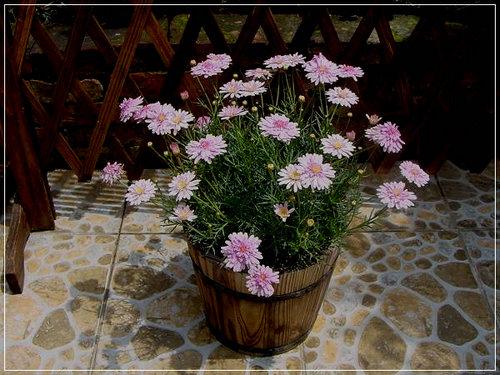 水瓶座的人喜欢什么样的花?水瓶座为什么说是12星座之首?
