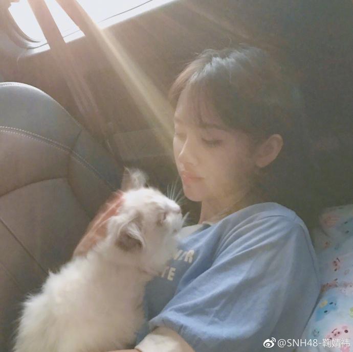 鞠婧�t喜欢的动物类型介绍,鞠婧�t家养的猫是什么品种?