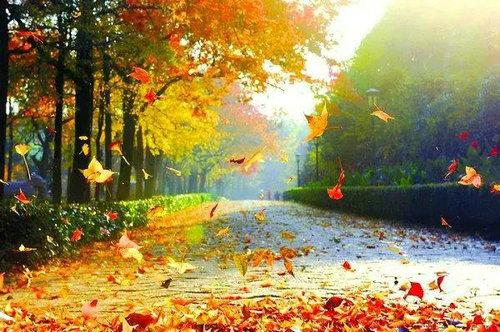 掉头发最厉害的季节是秋天?掉头发和季节到底有没有关系?