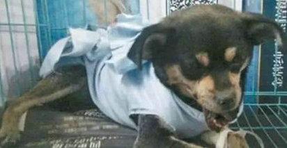 爱狗人士为什么被称为邪教?爱狗人士是如何演变成一个贬义词的?