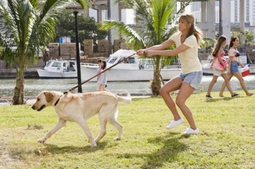 遛狗时不栓绳子犯法吗?遛狗不牵绳的人怎么举报?