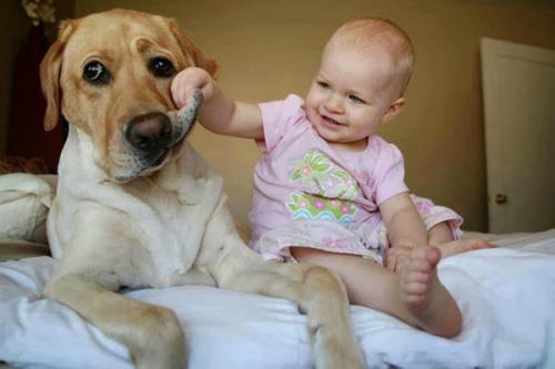 为什么说女生不能养狗?养狗的女人不能娶是真的吗?