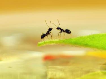 腰围多少厘米才能称之为蚂蚁腰?蚂蚁腰和A4哪一个更细?