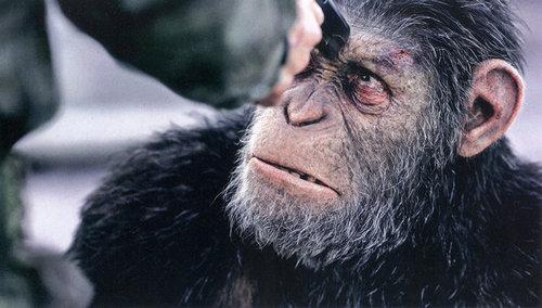 猩球崛起3是猩球崛起系列最后一部吗?猩球崛起3中凯撒最后结局死了吗?