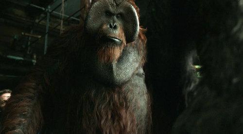 猩球崛起3红色大脸猩猩是什么品种?猩球崛起3最后一句话是什么意思?