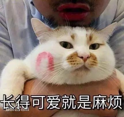 关注过网红猫楼楼的微博也一定在表情包中见过这个特征明显的可爱胖猫