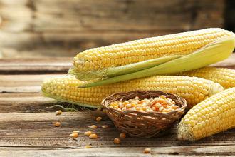 苞米和玉米是一个品种吗?生玉米能不能直接吃?