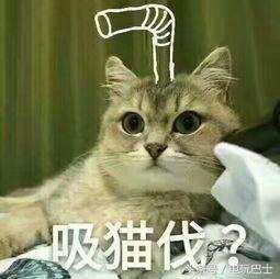 吸猫指的是什么意思?重度吸猫患者又是什么梗?