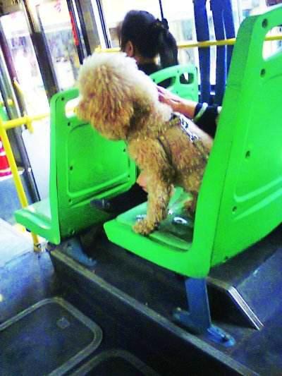 乘公交车不能带宠物吗?公交车上为什么不能带宠物?
