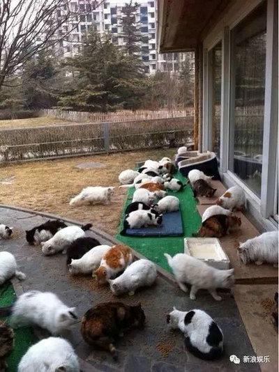 刘亦菲一共养了多少只猫?刘亦菲养的黑猫是什么品种?