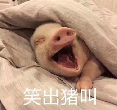 笑出猪叫这个梗是怎么来的?具体意思是什么?