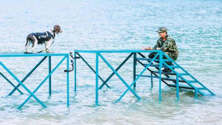 奇兵神犬中训练的海岛在哪里?奇兵神犬有没有第二季吗?