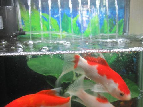 鱼缸里的水有气泡是怎么一回事,水中有气泡是水质不好了吗?