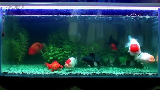 金鱼应该几天换一次水?金鱼鱼缸水不清澈怎么办?
