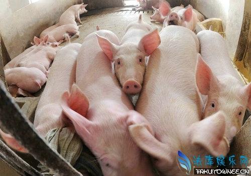 猪的尾巴有什么作用?动物为什么都要长尾巴?