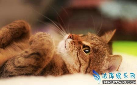 养猫麻不麻烦?猫一个月能吃多少猫粮?