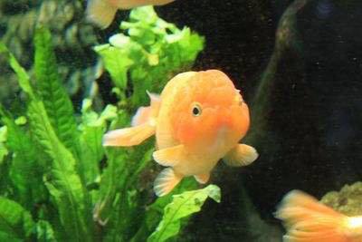 新鱼进缸不吃食怎么办?上浮鱼食和下沉鱼食哪种好?