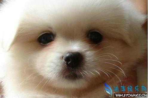 狗狗泪痕是怎么回事?狗狗的视力大概能看多远?