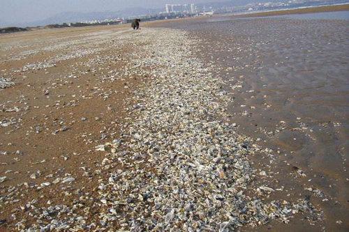 大海哪时候退潮?赶海应该哪时候去?