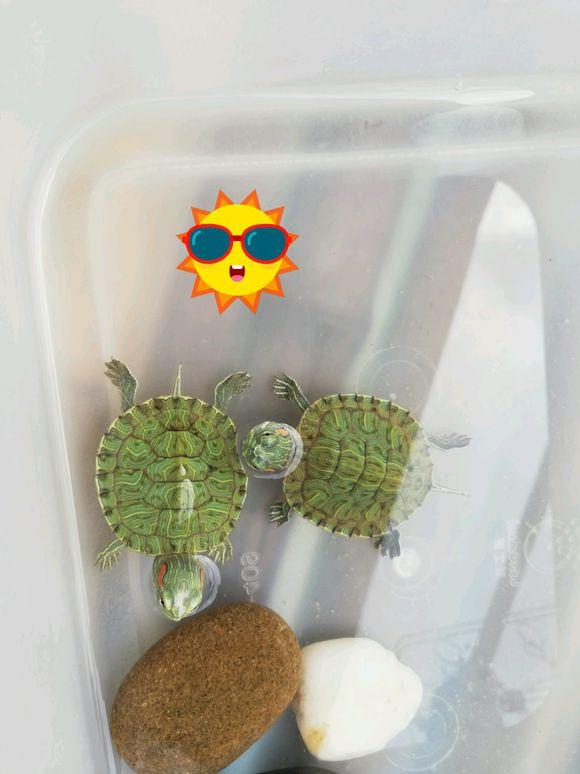 巴西龟为什么喜欢晒太阳的时候睡觉?巴西龟每天睡觉多长时间?