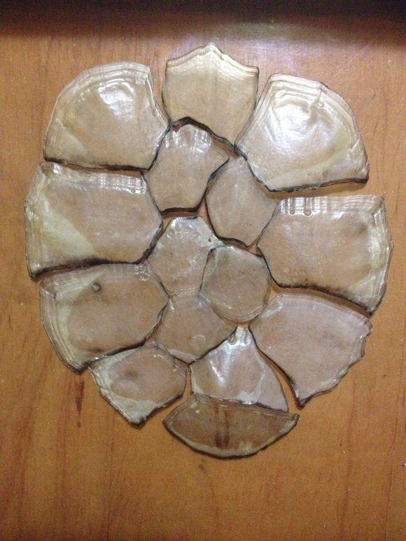 巴西龟退壳乌龟什么退壳?巴西龟退壳时需要注意什么?