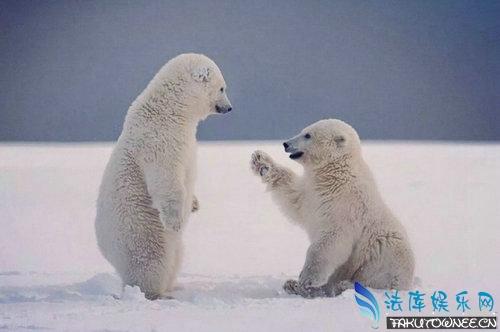 快灭绝的动物有哪些?动物灭绝后对我们有影响吗?