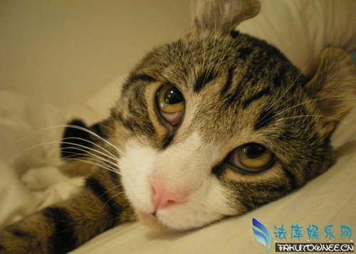 猫喜欢吃什么鱼?猫吃鱼被卡住怎么办?