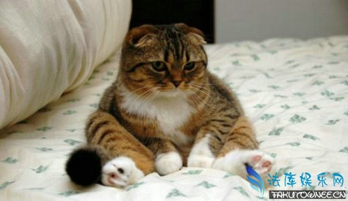 猫能活多少年?世界上年龄最大的猫是多少岁?