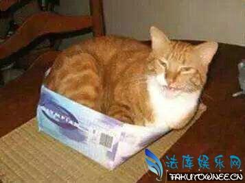 猫的身体为什么那么柔软?猫喜欢钻盒子的原因是什么?