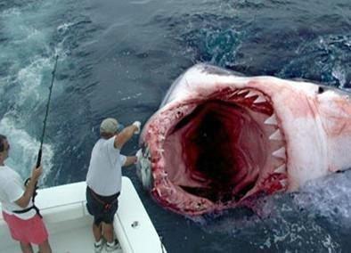 巨齿鲨真的存在吗?真实存在的巨齿鲨有多大?