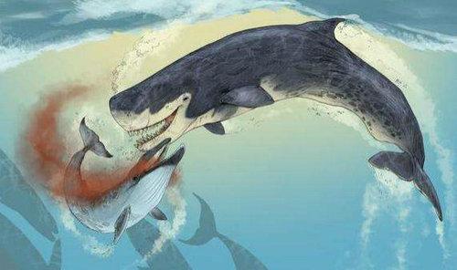 巨齿鲨有第二部吗?巨齿鲨有没有天敌的存在?