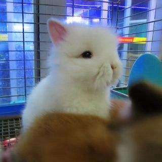 宠物兔子能洗澡吗 脏了怎么办