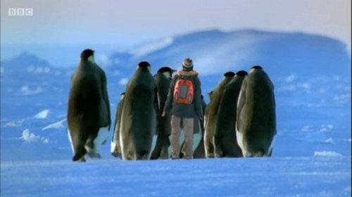 最大的企鹅叫什么名字 帝王企鹅有多大